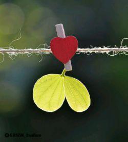 عشق من دارد به دردت میخورد این روز ها...هرچه باشد درد سر هم قسمتی از عاشقی ست....