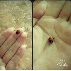 این کفشدوزک اومده بود خونمون میخاستم بکشمش دلم نیومد:)به نظرتون چکارش کنم؟