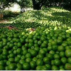 واییی ببینید چی آوردم براتون رفتم سرباغ:)))دعوا نکنید بهمتون میرسه راستی سلام روزتون گوجه سبزی گوجه سبزی:)♡♡♡