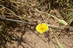 گل روییده در قتلگاه شهدای دفاع مقدس_بادمان شهدای کانال کمیل