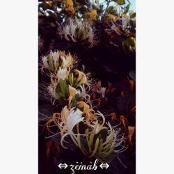 #چند دقیقهـــــ پیشـــــــ #گل هایـــــــــ بهارے .باغچمونــــــــــ تو حیاطــــــــــ خونمونــــــــــــــ یه بوییــــــــــ پیچیده  #فوق العادهــــــــــــــ هس photo by me