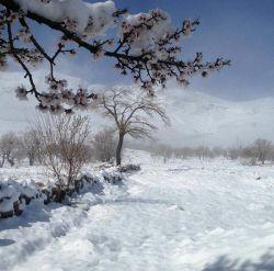 بارش زیبای برف دیشب  روستای شیخ شبان