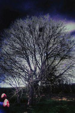 #درخت #تاریکی  قبل از اینکه شاخه هایش زیبایینوررا لمس کند؛ ریشه هایشتاریکیرا لمس کرده...  گاه برای رسیدن بهنور؛بایـــــــــد ازتاریکیها گذر کرد...