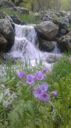 به این میگن عکس هاااا.زیباییهای طبیعت ایلام