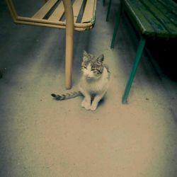 گربه ی دوست داشتنیه کمبوددار