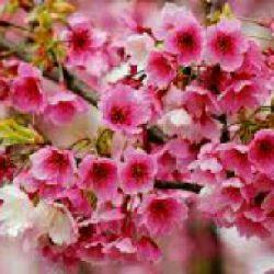 زندگی موسیقی گنجشک هاست زندگی باغ تماشای خداست... زندگی یعنی همین پروازها، صبح ها، لبخندها، آوازها... سلام صبح بخیر..