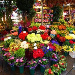 بازار گل آمستردام در سینگل که یکی از کانال های متعدد شهر است واقع شده است. این بازار گل، آخرین بازار گل شناور آمستردام بوده و همیشه جمع کثیری از گردشگران را به خود جذب می کند