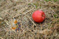 جاذبه سیب ،  آدم را به زمین زد و  جاذبه زمین ، سیب را !  فرقے نمیڪند ؛ سقوط  سرنوشت دل دادن به هر جاذبه اے غیر از خداست.