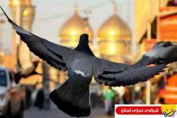 یادگار امام :دوره طولانى حبس و حصر ، امام کاظم(ع) را ممتاز ساخته است(+ عكس)