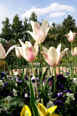 باغ گل چمران کرج