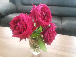 شاد زندگی کردن را از گلهای سرخ باید یاد بگیرم با اینکه از بوته جدا کردم اونها رو و عمر کوتاهی دارن باز هم خندیدن زندگی روی گلبرگهایشان احساس میکنم
