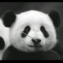just... panda..
