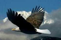 من عقابی بودم که نگاه یک مار  سخت آزارم داد  بال بگشودم و سمتش رفتم  از زمینش کندم  به هوا آوردم  آخر عمرش بود که فریب چشمش، سخت جادویم کرد  در نوک یک قله، آشیانش دادم که همین دل رحمی، چه بروزم آورد  عشق، جادویم کرد  زهر خود بر من ریخت  از نوک قله زمین افتادم  تازه آمد یادم، من عقابی بودم