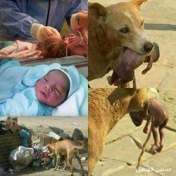 این سگ یه نوزاد دختر تازه متولد شده روتو زباله ها پیدا میکنه وبدون اینکه اسیبی بهش برسونه اونو تا دم بیمارستان میبره وباعث میشه نوزاد زنده بمونه !!!!! بنظرتون رفتار کدوم حیوان انسانی تربوده ؟!!!