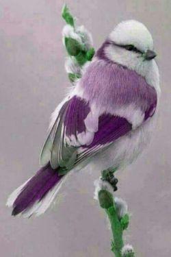 مغرور  نباشید... وقتی پرنده ای زنده است... مورچه  را میخورد، وقتی میمیرد مورچه٬ او را میخورد.!!!!!!!! شرایط.... به مرور زمان  تغییر میکند.!!!! هیچوقت.... کسی را تحقیر نکنید.!!!!! شاید امروز .. قدرتمند باشید اما.!!!!!!!! زمان..... ازشما قدرتمند تر است.!!!! یک درخت، هزاران چوب کبریت را میسازد.. اما....... وقتی زمانش برسد٬٬٬ یک چوب کبریت میتواند٬ هزاران درخت را بسوزاند!!!!! پس  خوب باشید و خوبی کنید.......