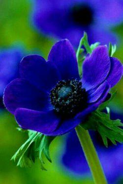 بوی گل ها عالمی را مست و حیران میکند دیدن مهدی هزاران درد، درمان میکند مدعی گوید که با یک گل نمی گردد بهار من گلی دارم که عالم را گلستان میکند