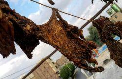 تهباهگ گوشتی که باانار ونمک خشک میکنند