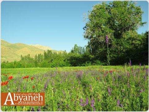 تصویری از طبیعت خرداد ماه روستای ابیانه