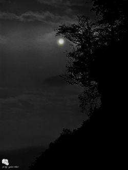 یه شب مهتاب