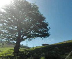جنگل ابر   شاهرود.روستای ابر