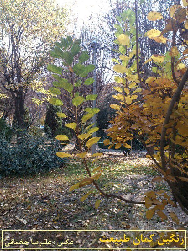 پاییز : رنگین کمان طبیعت