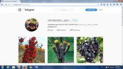 صفحه اینستاگرام نهالستان پارس