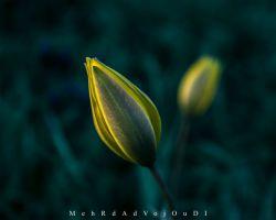 نشاط این بهارم بر گل رویت چه كار آید؟ تو گر آیى، طرب آید، بهشت آید، بهار آید  #spring #emotional #lovely #colorful #tabriz #iran #myshot #onshot #bestshot #nikon #nikond3300 #d3300 #nikon_photo #nikon_top #nikonshot #nikon_shot #nikonphotography #nikon_photography #iran_nikon #aquarius_photography