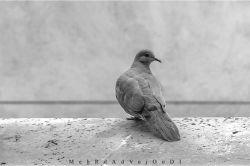 همسایه وفادار چند ساله ی اتاقم... جفت بودنشان حسادت برانگیز است  #spring #emotional #in_veranda #tabriz #iran #myshot #onshot #bestshot #blackwhite #black_and_white #nikon #nikond3300 #d3300 #nikon_photo #nikon_top #nikon #nikonshot #nikon_shot #nikonphotography #nikon_photography #iran_nikon #aquarius_photography