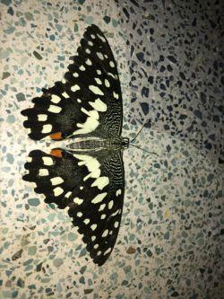 دیشب یه پروانه گرفتم^_^