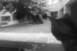 یه گربه زردی  داریم که هر وقت میاد اینورا، حتما میاد پشت پنجره ام میومیو میکنه و یه سری بهم میزنه :)) امروز مهمونم بود.