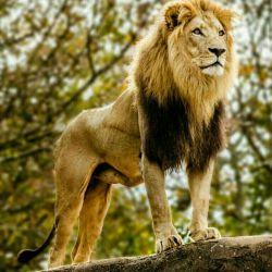 سلطان جنگل هم که باشی، رام شدنی هستی،،پس زنده باد گرگ که بمیره هم رام نمیشه...!؟