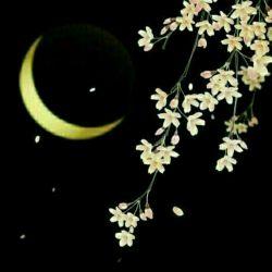 من خودم یکه و تنها ستاد استهلال ام... چند وقتیست هفت آسمان را  دنبال تو می گردم ماه من! نکند رخ بنمایی به رقیب!!