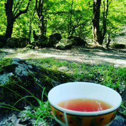 یه چای آتیشی در دامان طبیعت ، جاتون خالی  .جنگل تاشته.رامیان  استان گلستان