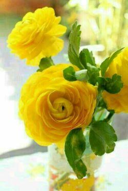 اسرار روانشناسی❤: میگن با هرکسی دوست بشویم  شکل و فرم آن را میگیریم  فکرش را بکنید اگر با خدا دوست بشوید  چه زیبا شکل میگیرید