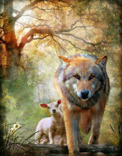 گرگ به گله خیره مانده بود پرسیدم:مگر گرگ ها هم فکر می کنند گفت: عاشق بره ای شده ام نمی دانم آبروی ذاتم راببرم یا شکارچی عشقم باشم...