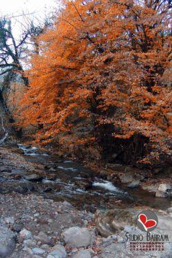 گیلان-شهرستان صومعه سرا-روستای آلیان (تیمور کوه)-عکس : بهرام حاجی زاده