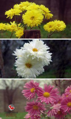گیلان-شهرستان صومعه سرا-روستای تطف-بهار 93-عکس : بهرام حاجی زاده