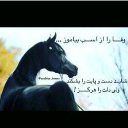 وفا را از اسب بیاموز.... شاید دست و پایت را بشکند ولی دلت را هرگز!