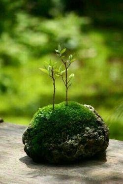 """خزه های سبز ...بر شیارسنگ ..... نفس می کشند انگار ....... جوانه می زند ....آن شاخه  ی خشکی که دیروز..... زیربرف پنهان بود ..... وپرستو ها ،،ییلاق را به شوق قشلاق ترک می کنند ..... زمین لباس فصل نو به تن کرد'""""  ....گل گندم ...."""