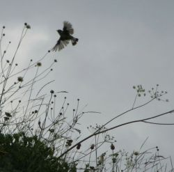 پرواز هم دیگر رویای آن پرنده نبود، دانه دانه پرهایش را چید، تا بر این بالش خواب دیگری ببیند …
