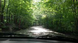 جنگل سراوان (رشت)