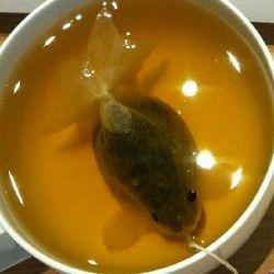 چای کیسه ای به شکل ماهی