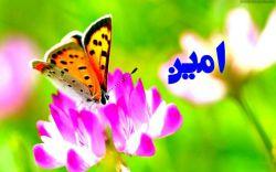 ممنون سید احمد
