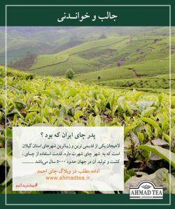 برای مطالعہ بیشتر در مورد پدر چای ایران بہ وبلاگ چای احمد روی وبسایت www.ahmadtea.ir مراجعہ نمایید. #بیشتربدانیم #چای