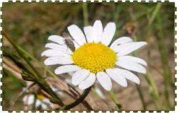 گلی از با تمام وجود جلوه گری می کند برای همه است ...