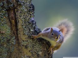 squirrel_on_the_tree-wallpaper-2048x1536[1]