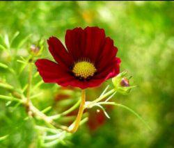 صبح به ما می آموزد که باور داشته باشیم،  روشنایی با تاریكی معنا می یابد   و خوشبختی با عبور از سختی هاست که زیباست...  سلام  پر از امید و شادی امروز شما