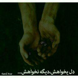 ترجیـح میدهــم همه را  ~  غریبــــــــه صدا كنــــــــــم  ~  تا وقتی از پشـت خنجر میزنند ~  با خودم بگویــــم بیخیال  ~  از غریبـــــــه بیش ازین  ~   انتـظاری نیســت  ~