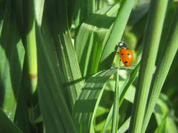 اینم عکاسی خودمه...در یکی از باغ های روستای شحنه-یزد
