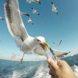 دریا برای #مرغابی تفریحی بیش نیست  اما برای #ماهی زندگی ست پس برای کسی که  عاشقانه دوستت دارد #ماهی باش نه #مرغابی!!!